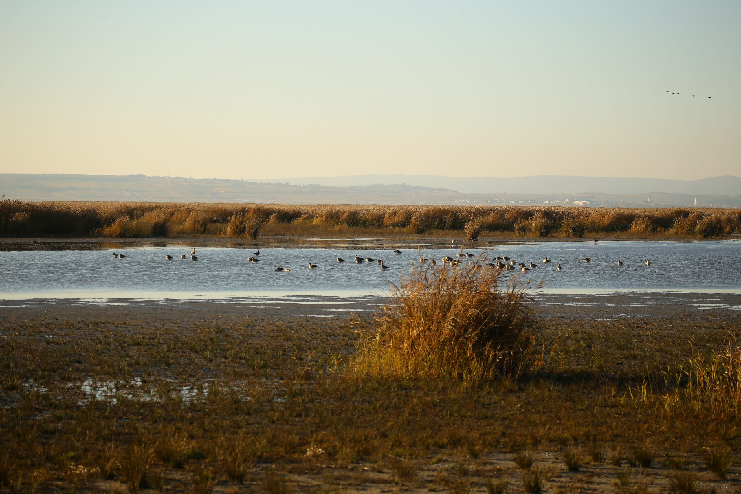 Nationalpark Neusiedlersee